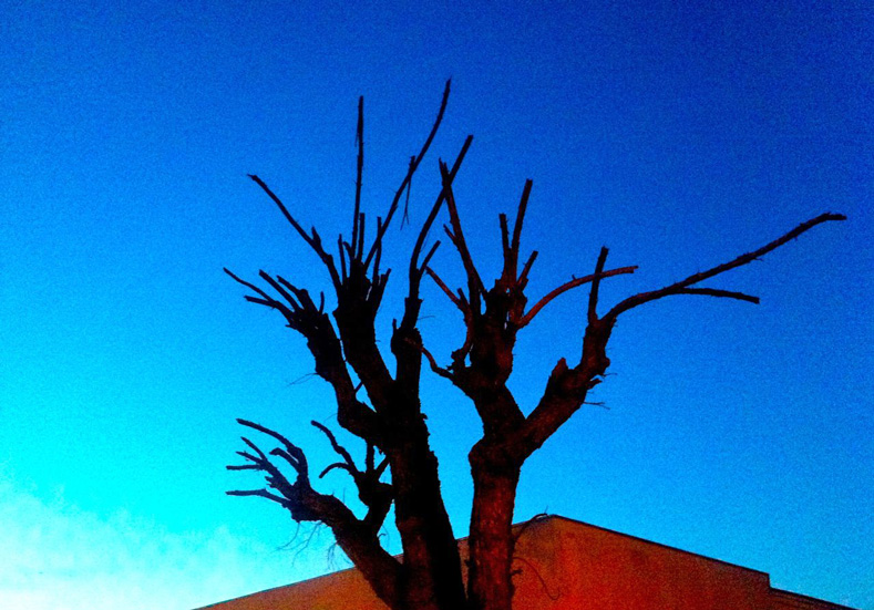 Tree in need of leaves. | charlesotn, w.va. | westvirginiaville.com photo